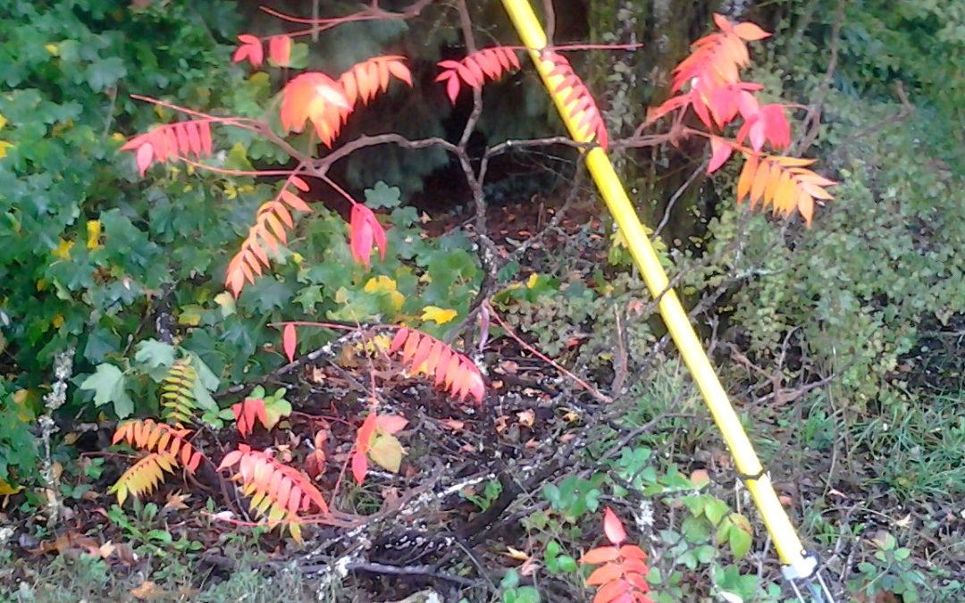 Tiny Autumn Tree