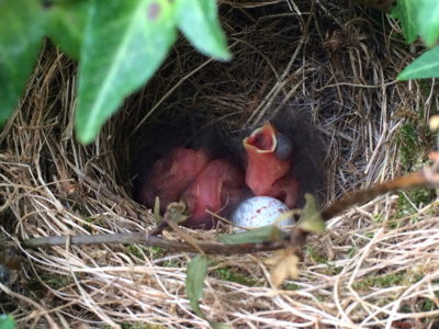 Baby birds in nest starts my positive mood.