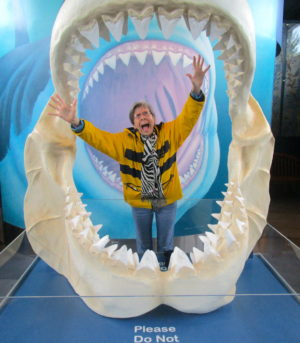 inside-mouth-of-shark-display