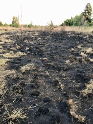 brush fire after firefighters do their job