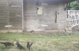 trail-cam-fox-kit-emerging-den