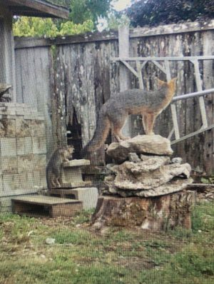 mama-fox-watches-kits-play