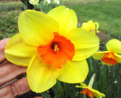 Spring-fuels-new-attitude