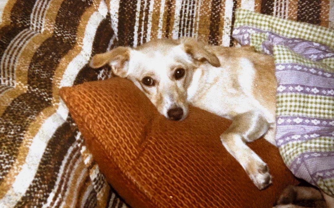 Sleep, Oh Precious Sleep: The Ultimate Comforter