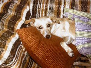 sleep-ultimate-comforter-and-health-aid